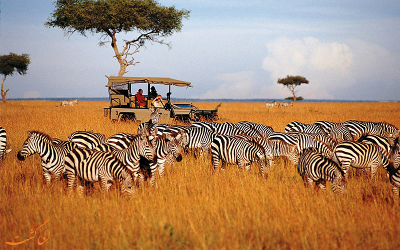 سافاری در تانزانیا-گردشگری ماجراجویانه