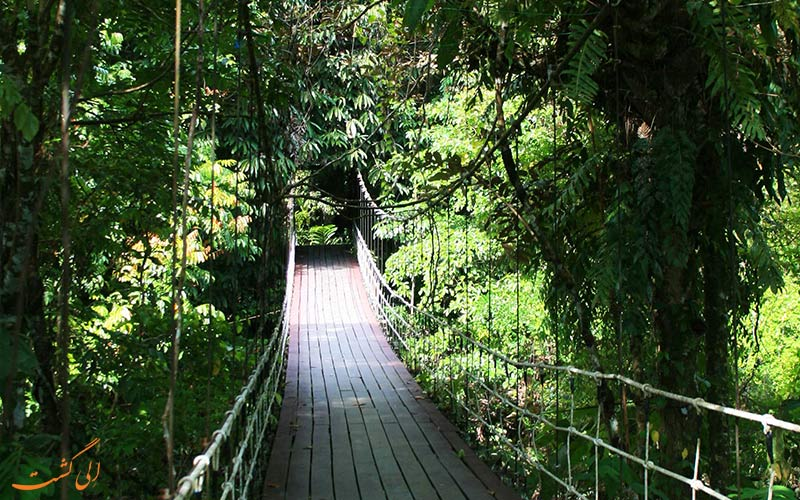 پیاده روی در پارک ملی تامان نگارا در مالزی-گردشگری ماجراجویانه