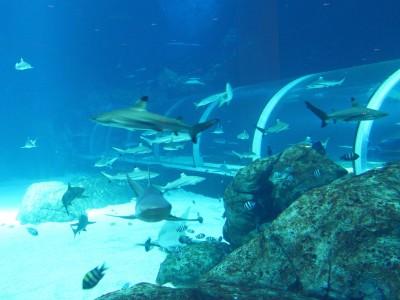 S.E.A. Aquarium - Shark Seas