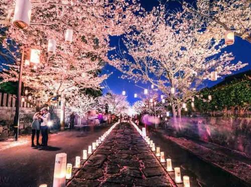 [عکس: cherry-blossom-lantern-festival-japan__880-500x374.jpg]