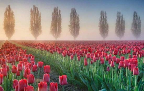جاذبه های گردشگری در فصل بهار