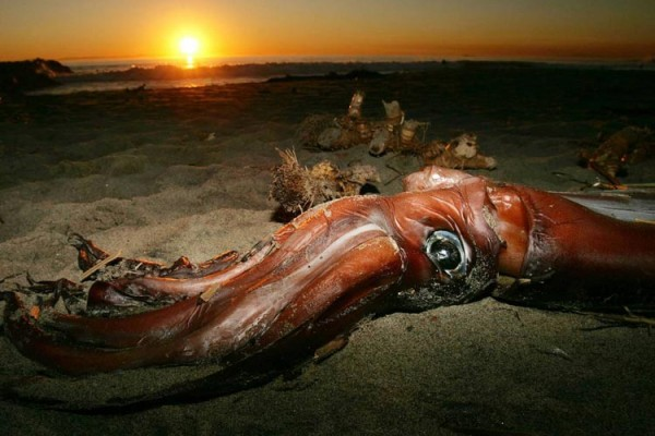 اشیای عجیب در ساحل