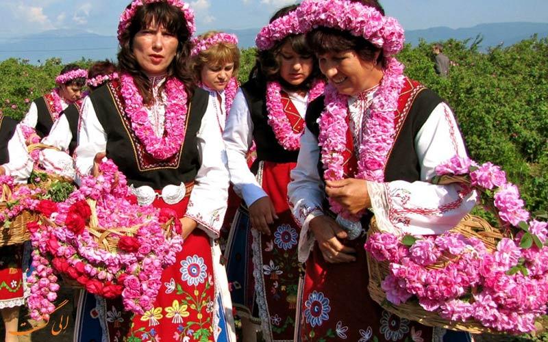 حقایقی درباره بلغارستان، مزارع گل رز