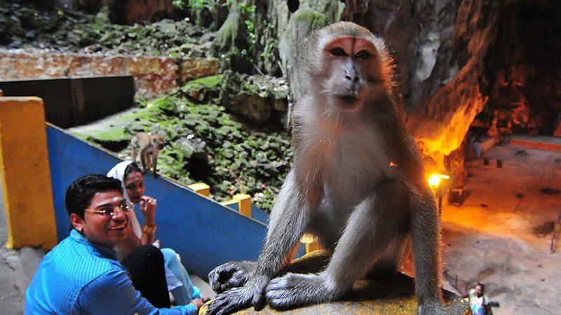 غار میمون ها