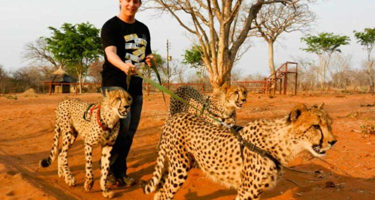 قدم زدن با چیتاها در آفریقا
