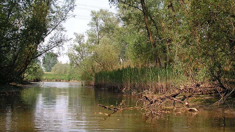 پارک ملی بیس بوسخ (Biesbosch national park)