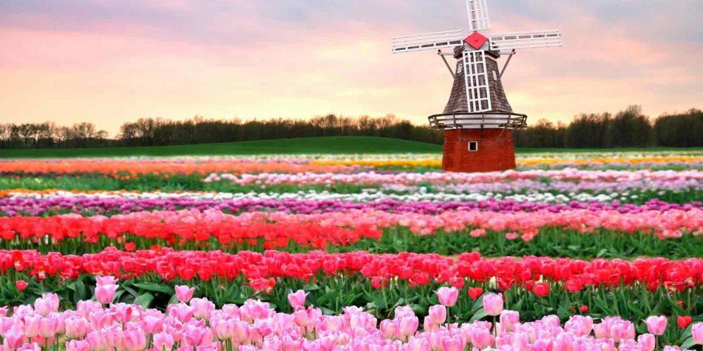 Keukenhof-Gardens-Amsterdam