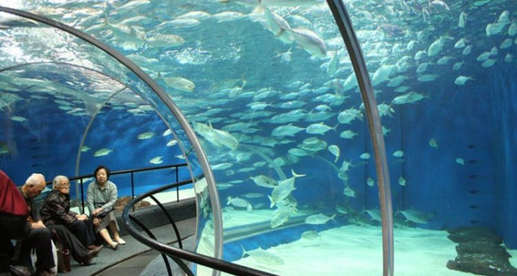 آکواریوم شانگهای (Shanghai Aquarium)