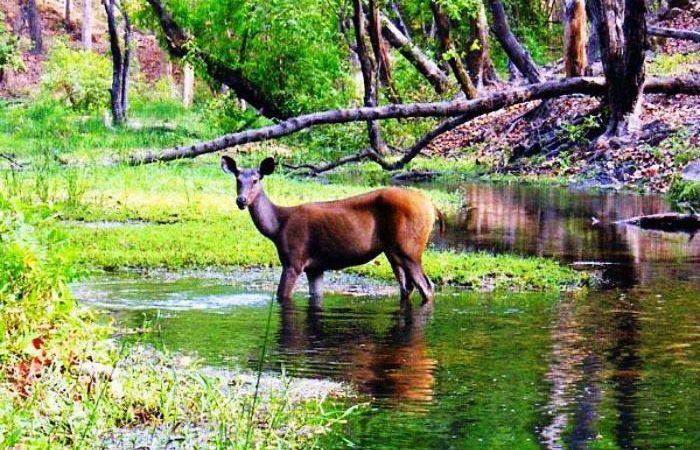 Bandhavgarh National Park, Madhya Pradesh