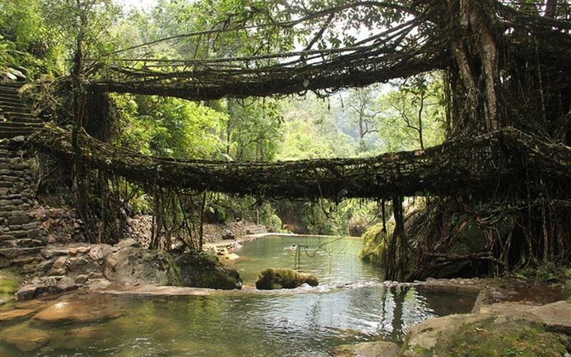 Bridge of living roots, Cherrapunji, Meghalaya