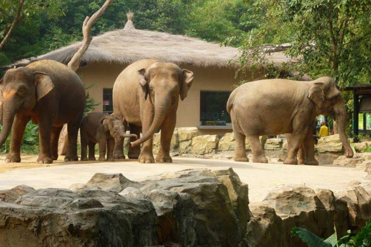 Chimelong Xiangjiang Safari.Park.original.6092