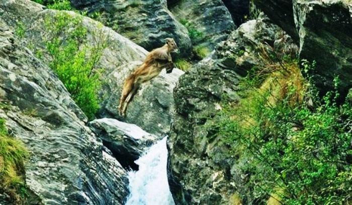 The Great Himalayan National Park, Himachal Pradesh