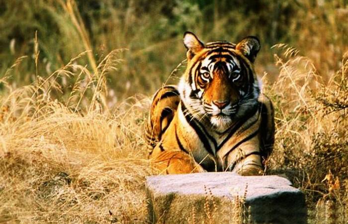 حیات وحش هند و چین (مستند)