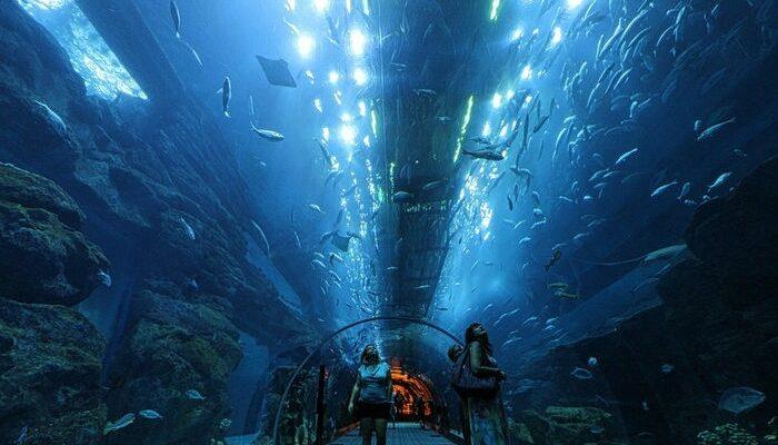 dubai_underwater_zoo