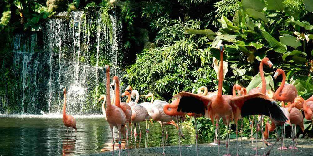 jurong-birdpark-flamingo