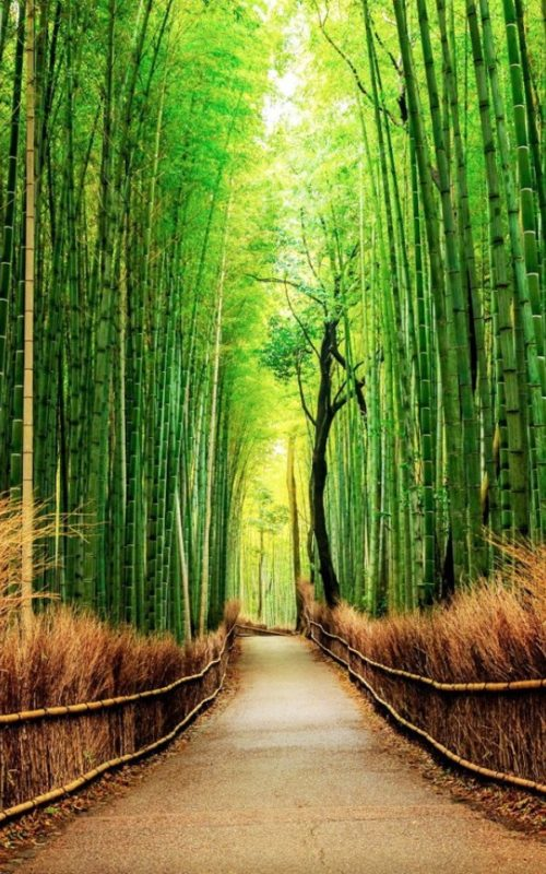 sagano-bamboo-forest-in-japan