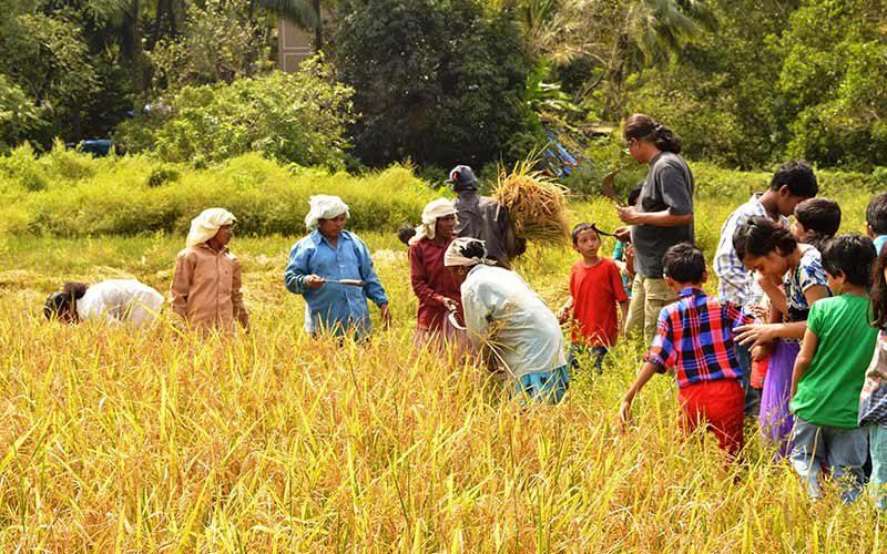 کشاورزی در گوا