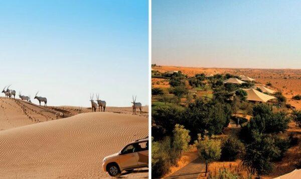 al-maha-santuary-doha-780x390