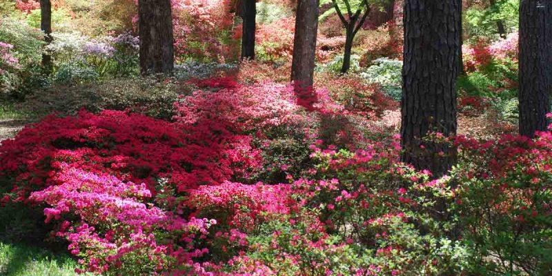 callaway-gardens