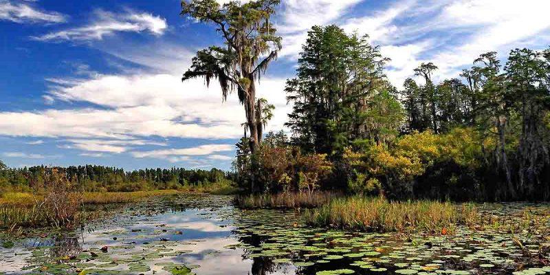 okefenokee-swamp