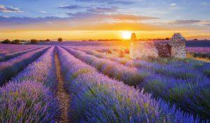 provence-france-lavender-fieldsprovence-france-lavender-fields