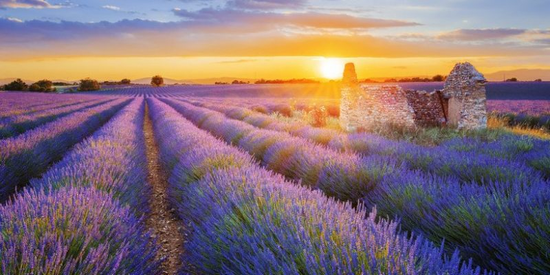 provence-france-lavender-fieldsprovence-france-lavender-fields