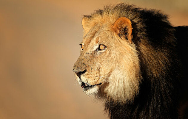 africa-best-game-reserves-kgalagadi