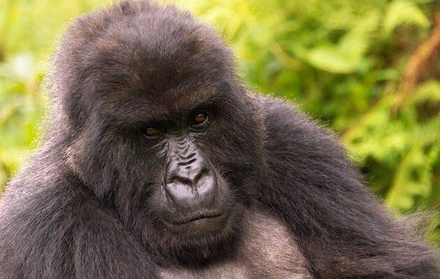 africa-best-game-reserves-volcanoes-national-park
