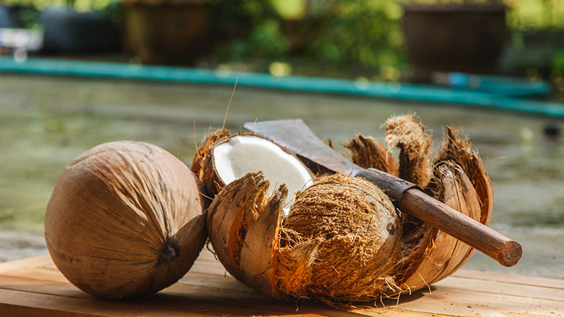 coconut in siri lanka