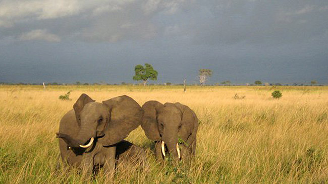 elephents in East Africa