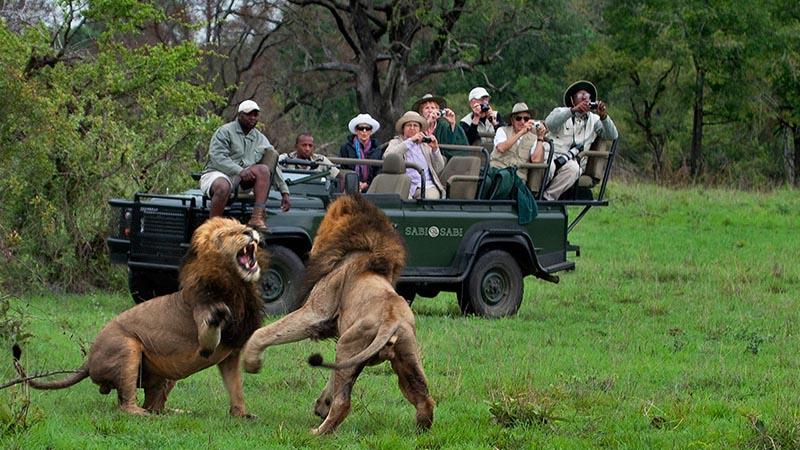 سافاری در آفریقای جنوبی