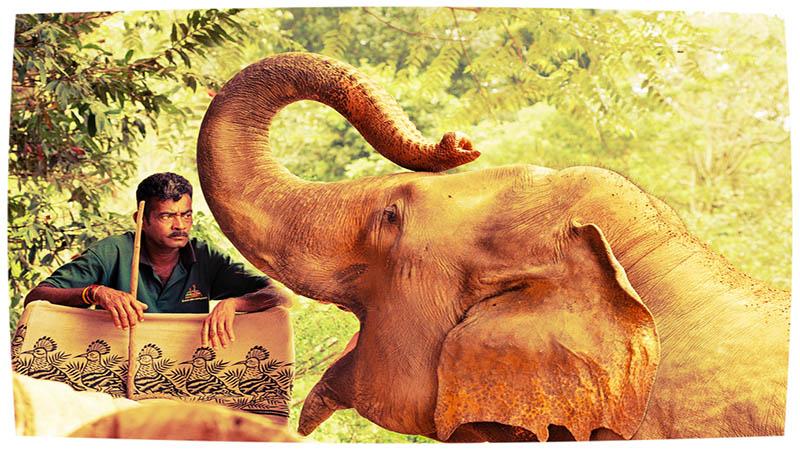 طبیعت سریلانکا