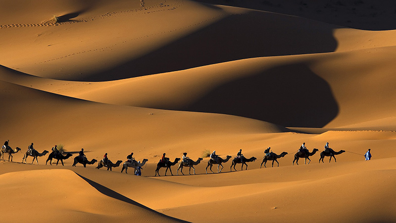 شترهای صحرای آفریقا