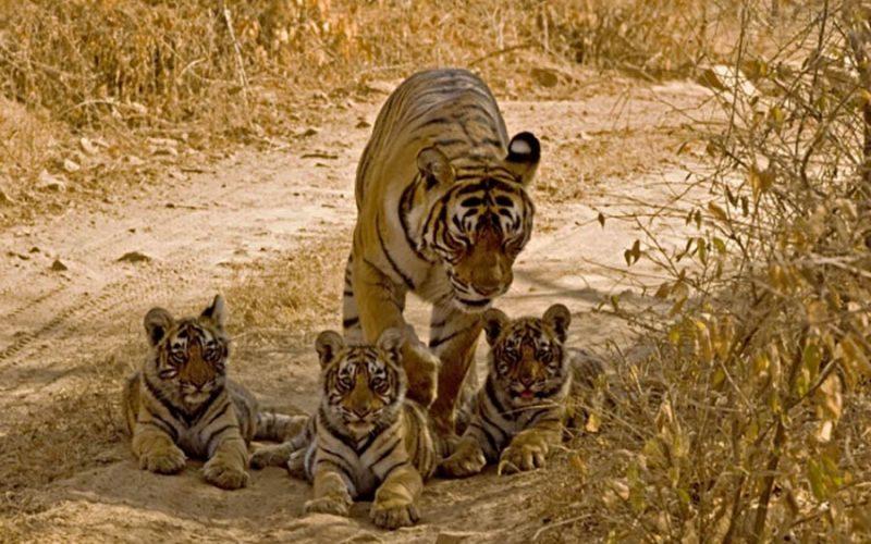 پارک ملی ران تامبور هند