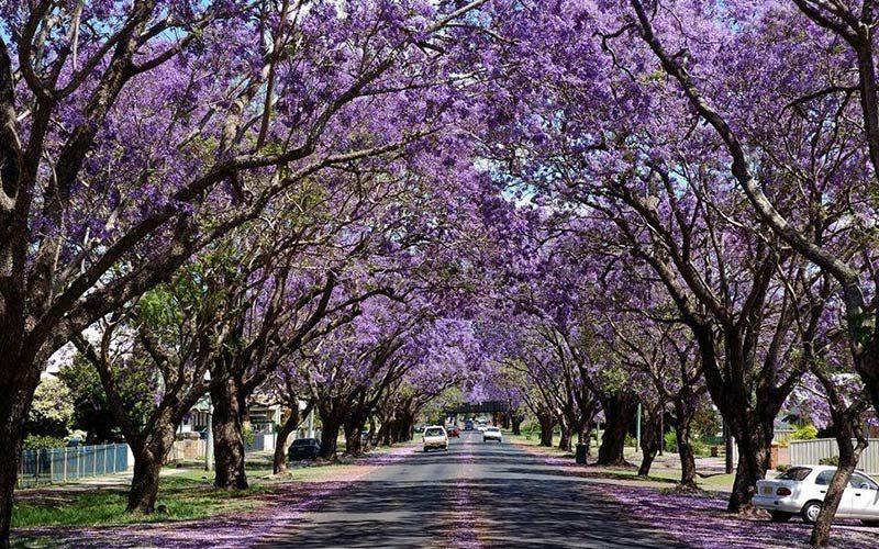 تونل مسیر درختان نورا