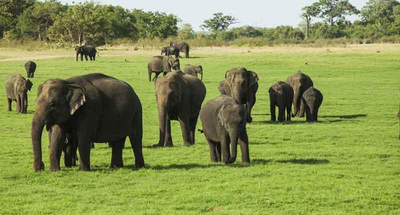 پارک ملی مینریا سریلانکا