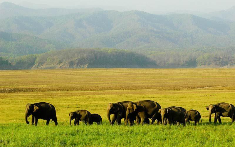 پارک ملی جیم کوربت هند