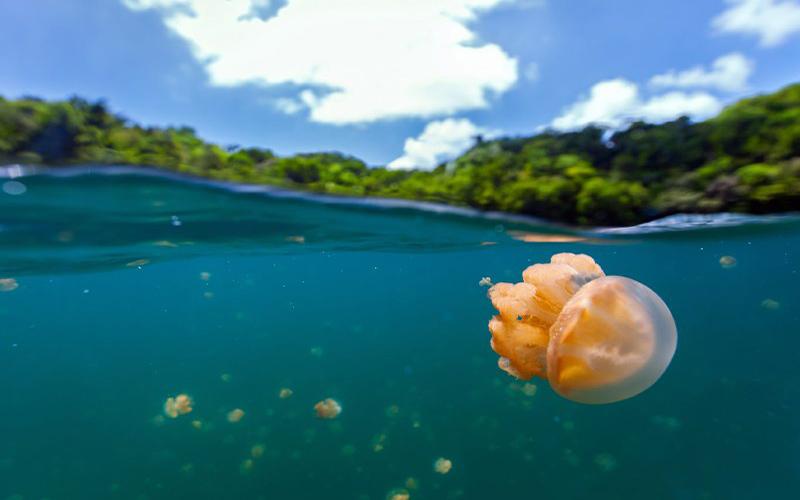 دریاچه عروس دریایی پالائو