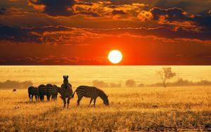 صحرای بزرگ آفریقا
