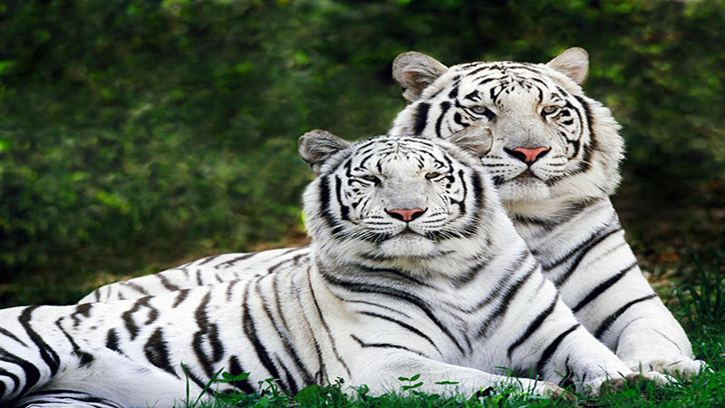 حیات وحش شمال شرقی هند