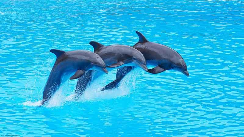 پارک دلفین ها