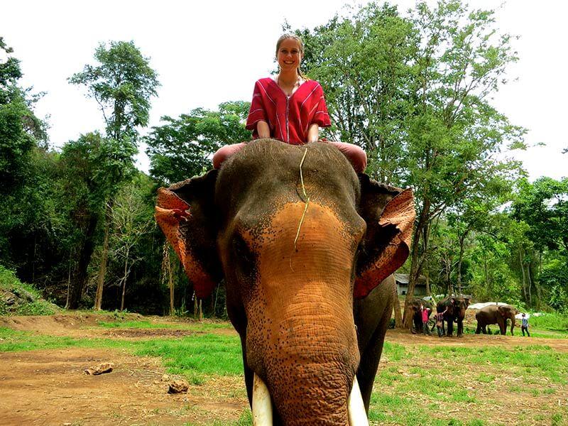 سوار شدن روی فیل   تایلند
