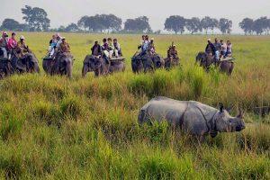 پارک ملی کازیرانگا در هند