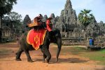 چگونه سوار یک فیل شویم؟