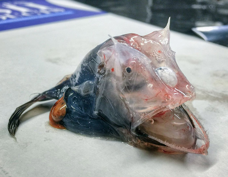 تصویر ماهی شکار شده توسط ماهیگیر