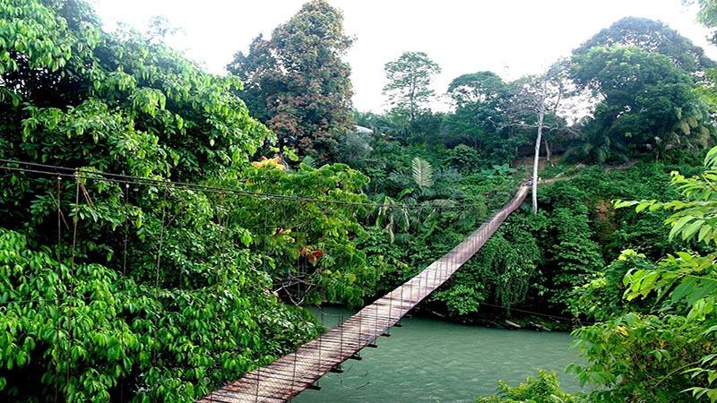 جنگل های بارانی اندونزی