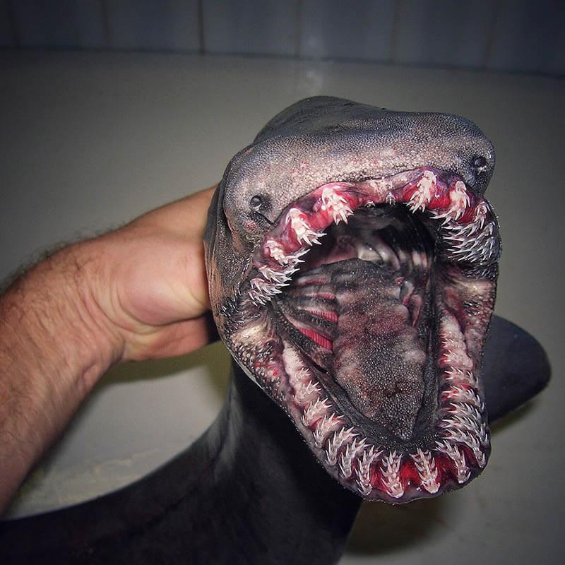 تصویر دیگری از موجودات دریا