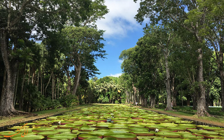باغات سلطنتی Pamplemousses