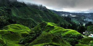 تپه های کامرون در مالزی