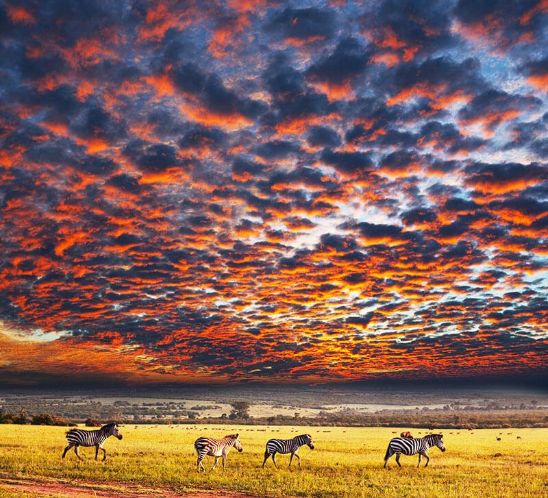 پارک ملی سرنگتی